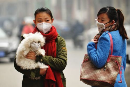 How To Rescue Your Dog From Air Pollution Dog Pollution