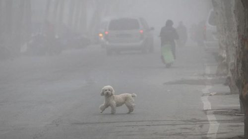 How is Air Pollution Affecting our Furry Friends? - Dog ...Air Pollution Effects On Animals And Plants